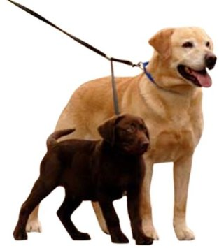 Dog Leashes for Two Dogs without Tangle.